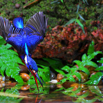 Птичья рыбалка
