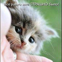 Весёлый пасьянс котоматрицы