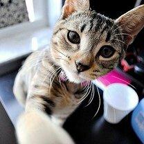Коты фотографируют себя