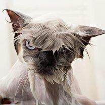 Обиженные мокрые кошаки смешных фото приколов