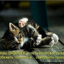 Весёлая кошачья матрица