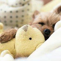 Сон милых щенят