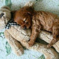 Сон милых щенят фото приколы