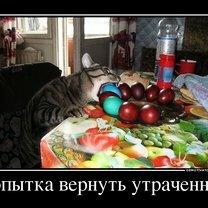 Фото приколы В поисках смысла (28 фото)