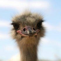 Эмоциональное и милое зверьё смешных фото приколов