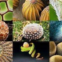 Яйца насекомых под микроскопом