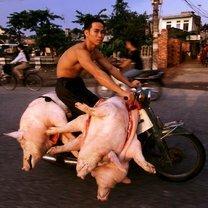 Гигантские грузы мотоциклистов смешных фото приколов