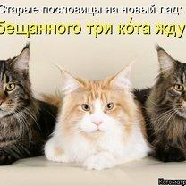 Забавная котоматричная подборка смешных фото приколов