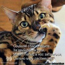 Котоматрицы для кошколюбов