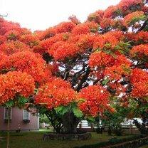 Самые чудесные деревья