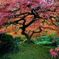 Фото приколы Самые чудесные деревья (19 фото)