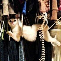 Эти фото - кошачья гордость! смешных фото приколов