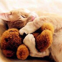 С кем спят животные
