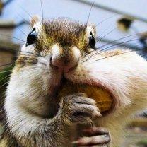 Забавные грызуны смешных фото приколов