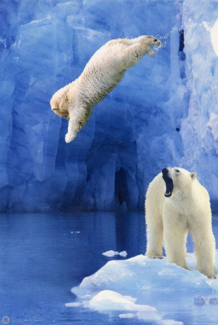 Арктик смешные картинки, дорогому гостюхин открытки