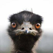 Милые, трогательные и забавные зверята смешных фото приколов