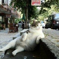 Кошачья жизнь: философия