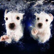 Псинки под водой