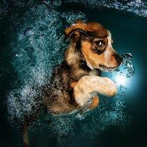 Псинки под водой фото приколы