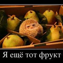 Фото приколы Деградируй правильно! (34 фото)