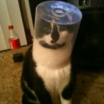 Кошки, которые запутались в жизни