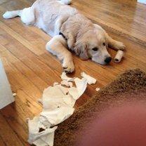 Нашкодившие собаки фото приколы