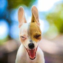 Курьёзные фотографии смешных фото приколов