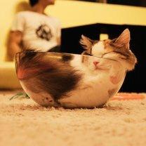Спящие кошки-виртуозы фото приколы