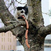 Чем питаются кошаки смешных фото приколов
