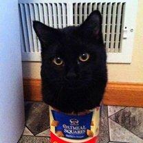 Кошачья любовь к картонным коробкам