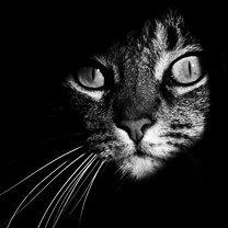 Кошки в чёрно-белых тонах смешных фото приколов