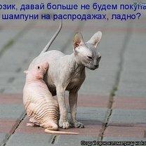 Котоматричная фантазия смешных фото приколов