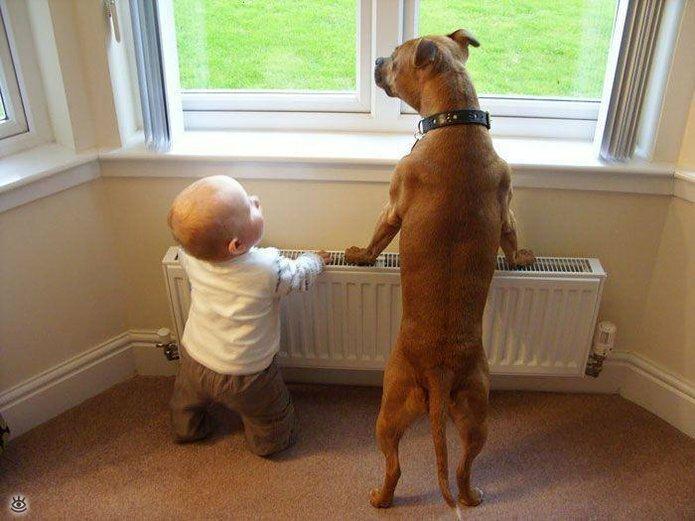 Позитив с детьми и собаками 6