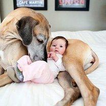 Позитив с детьми и собаками