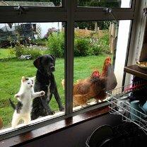 Любопытные звери у окна