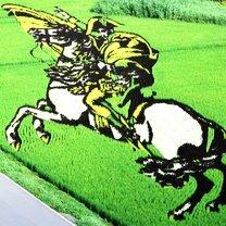 Масштабные картины на рисовых полях
