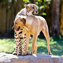 Трогательная дружба разных зверей