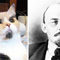 Коты, похожие на... смешных фото приколов
