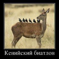 Фото приколы Счастливо жить не запретишь! (34 фото)