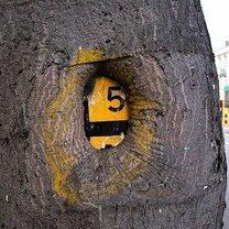 Фото приколы Всеполгощающие деревья (15 фото)