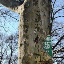 Всеполгощающие деревья фото приколы