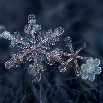 Снежинки в увеличении фото приколы