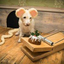 Рождественские открытки с собаками фото приколы