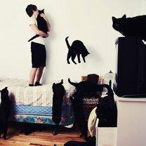 Когда любовь к кошкам так сильна... смешных фото приколов