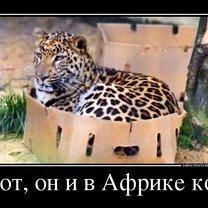 Фото приколы Соблюдай дистанцию! (22 фото)