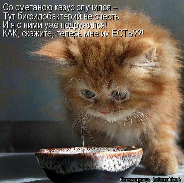 Прелестная котоматрица 15