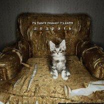 Прелестная котоматрица смешных фото приколов