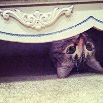 Миссия: найди кота смешных фото приколов