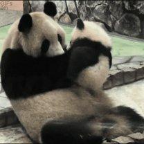 Гифки с весёлым сюжетом смешных фото приколов