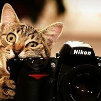 Звери против фотоаппарата